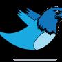 Haliaeetus twitterocephalus